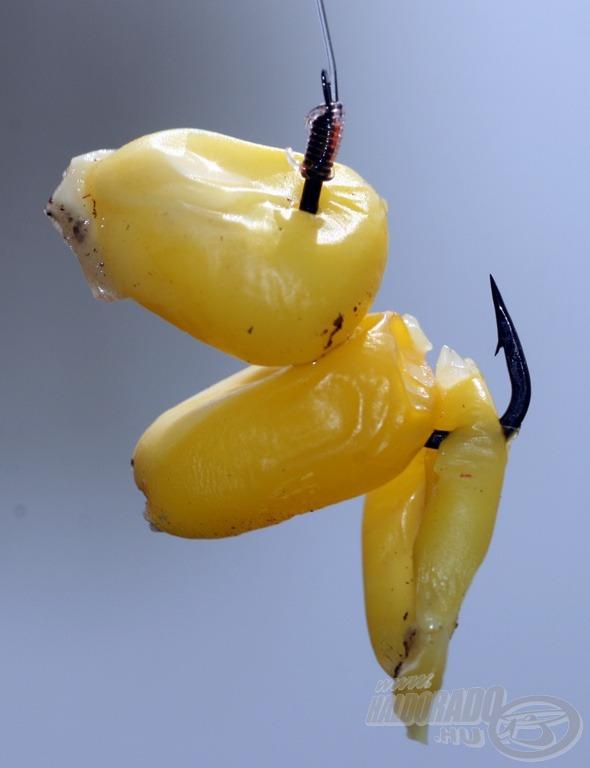 Hagyományos kukorica pontycsali