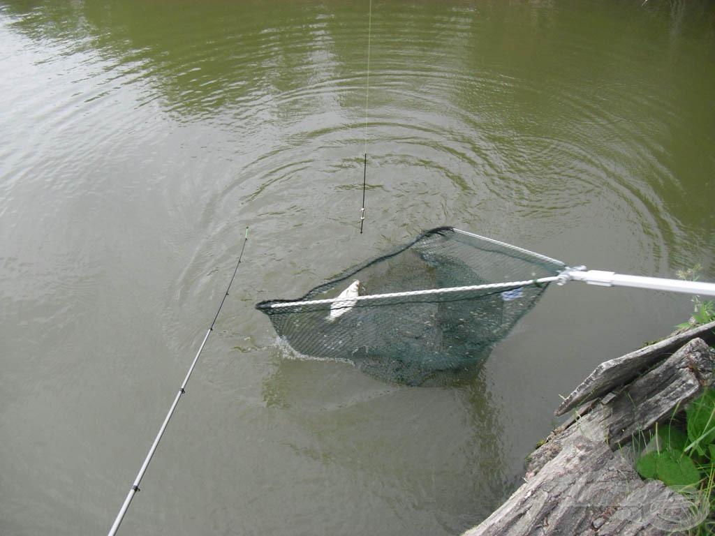 Az első hal a szákban