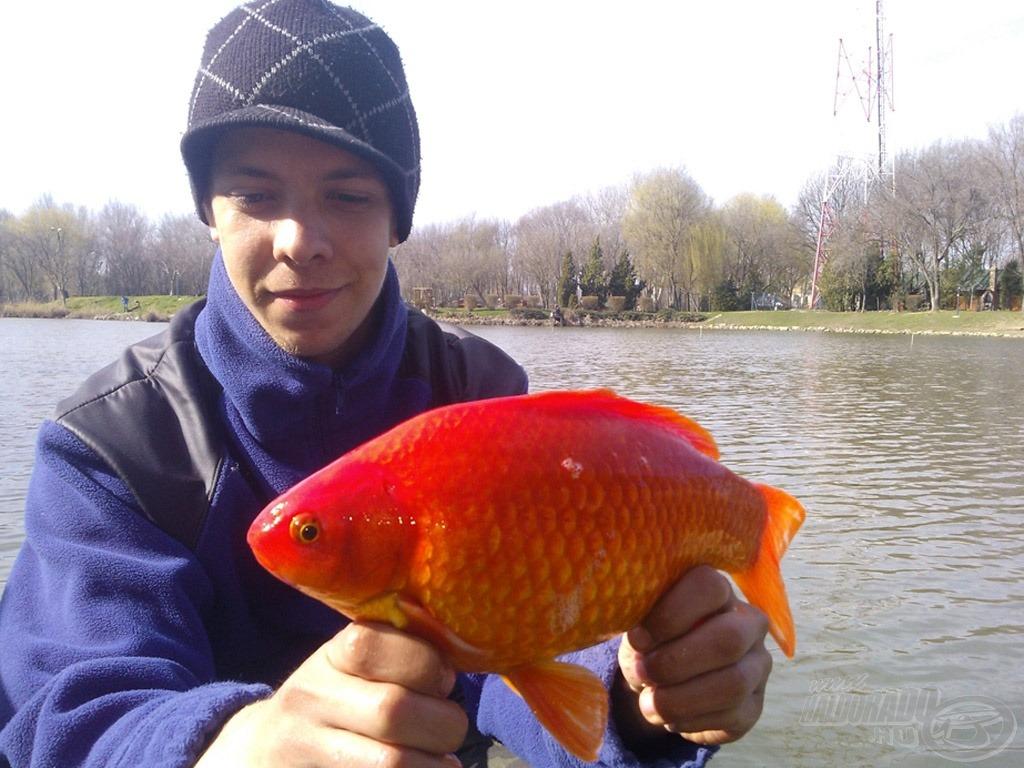 Délutánra tovatűnt a borús idő, és a napsütés mellett a halak is színt vittek a horgászatba :)