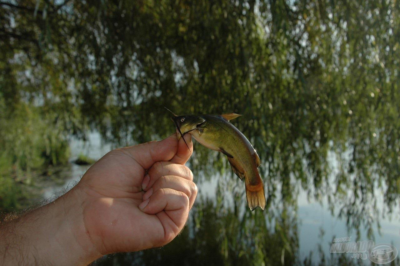 """A """"Kis kedvencek"""", amik tovább fokozzák az itteni horgászat nehézségeit"""