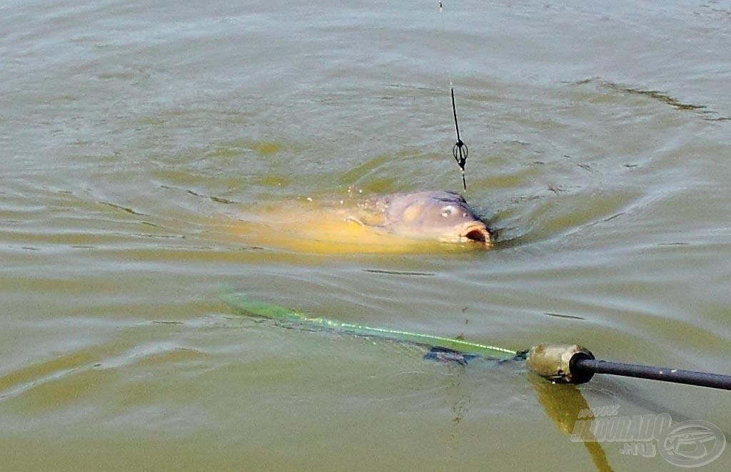 Kifogottnak az a hal tekinthető, amely az utolsó (verseny végét jelentő) jelzés megkezdésekor már nincs a vízben