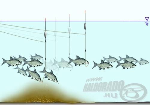 A vízközt, de alsóbb vízrétegből táplálkozó halak horgászatához is jól jön a feltolós úszó