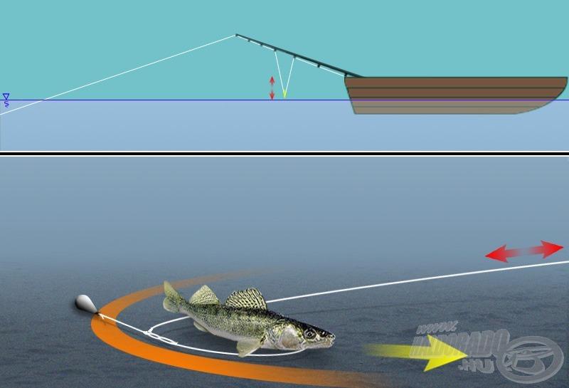 """Ha a hal a kidobott zsinór által megszabott körív mentén mozog, a karikán csak kis rángásokat és kisebb emelkedést-süllyedést tapasztalhatunk. Utóbbiak mértéke igen messze van attól, hogy közben valójában mennyi """"zsinórt vitt el"""" a csalinkkal foglalkozó hal…"""
