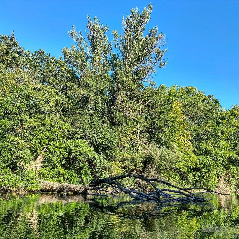 Mindenhol vízbe dőlt fák és bokrok tarkítják a medret