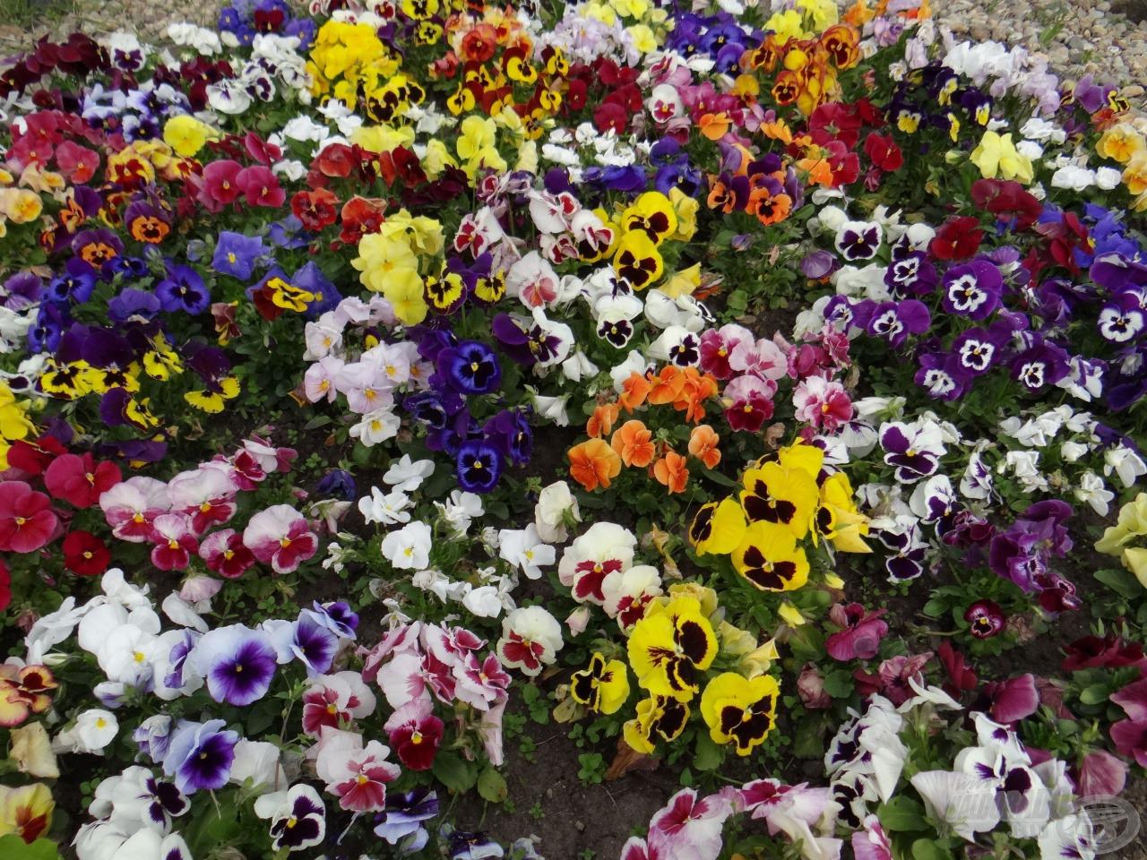 Ugyanitt: virágszigetek