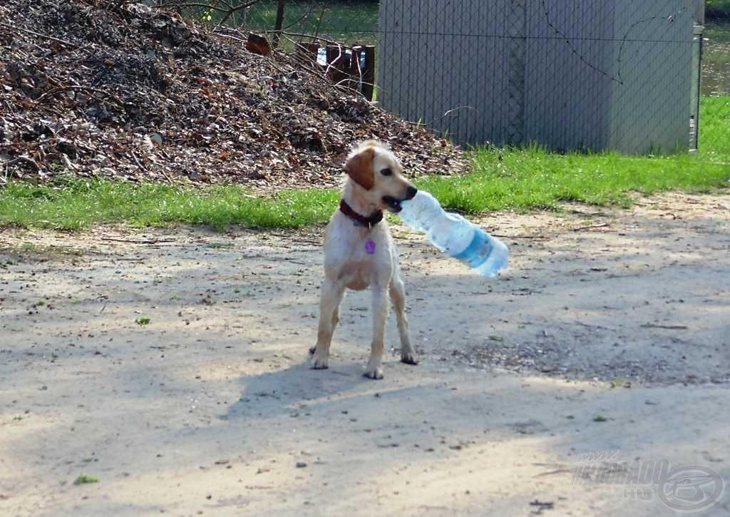 Kis víz, nagy hal! Kis kutya, nagy palack!