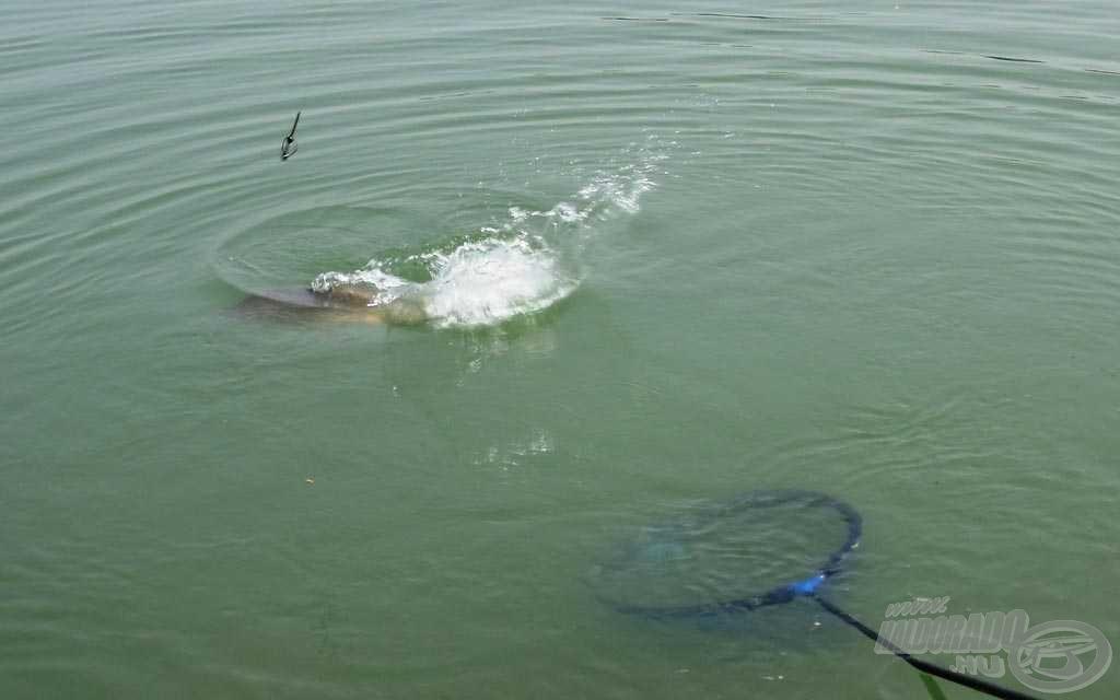 Harcos halacskákat sikerült fogni