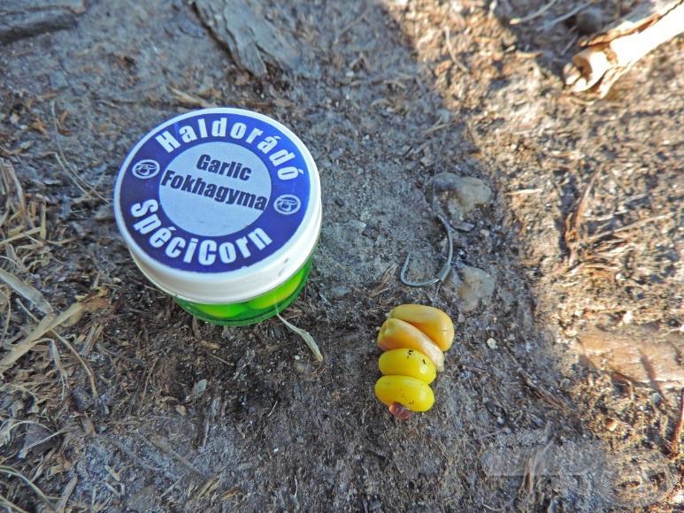A csali: etetőanyagból kivett 2 szem kukorica kikönnyítve 2 szem fokhagymás SpéciCornnal