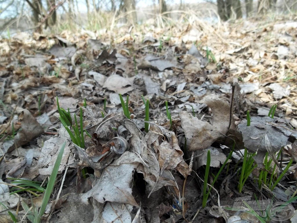 A bomló avar, alatta sarjadó növényzet…