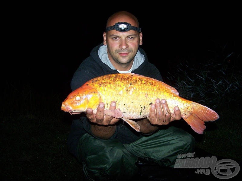 Újabb feladat nehezedett Gyurkára, még a kötelező fotózáshoz is neki kellett megtartani a halakat!