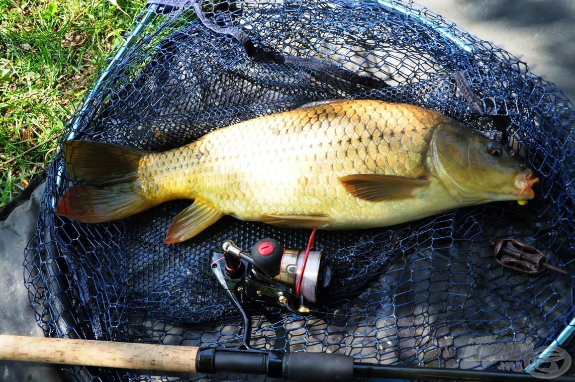 Gyönyörű, egészséges, jó erőben lévő halakat lakják a vizet, és a tó adottságainak köszönhetően rendkívül sötét árnyalatúak