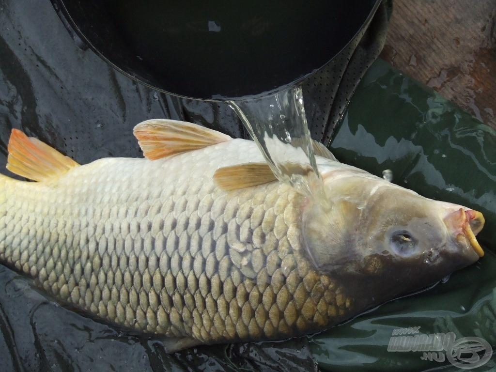 Pontymatracon locsolt hal. Ez sok helyen egy újfajta halételnek gondolnák, de ugye mi tudjuk, hogy mit jelent