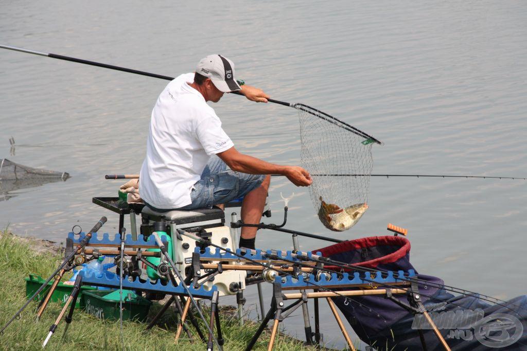 A kiló feletti halat igen meg kell becsülni, merítőből kborítva kerül a szákba