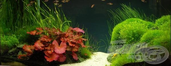 200 liter tömény növény