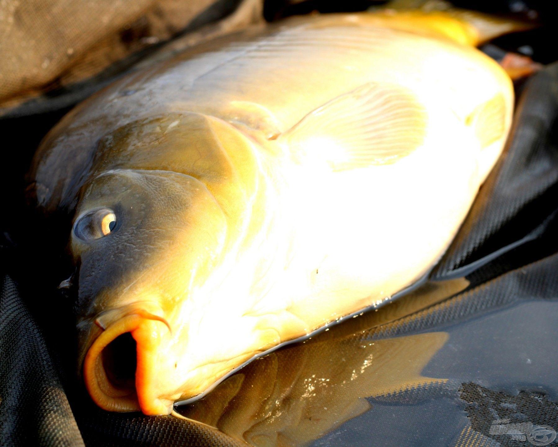 Egy szép aranysárga tükrös a matracon