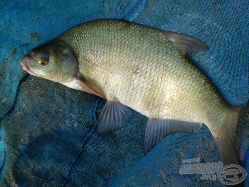 Merítőben a jó hal