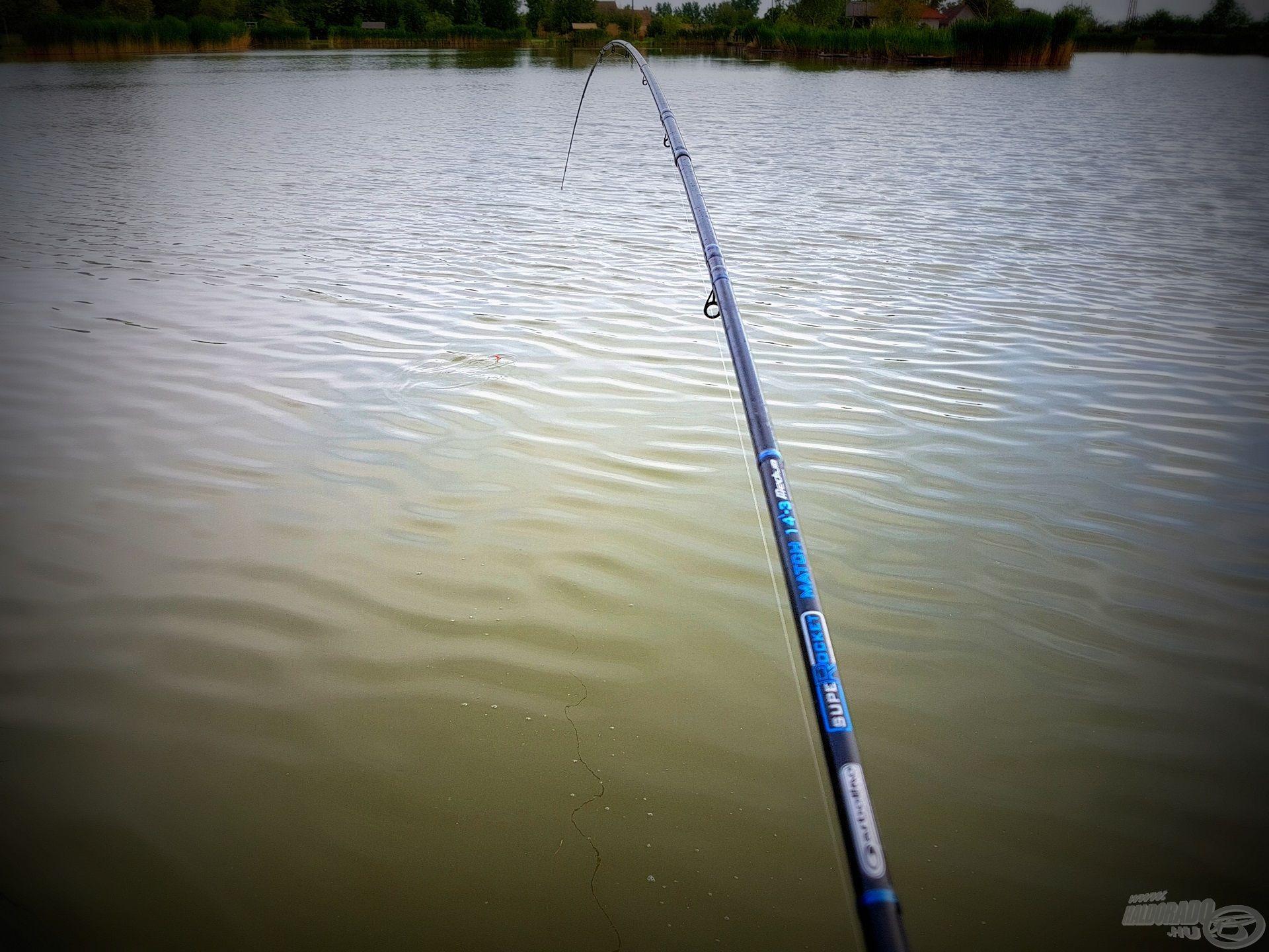 Nem volt könnyű a halakat az etetésre állítani, de végül sikerrel jártam