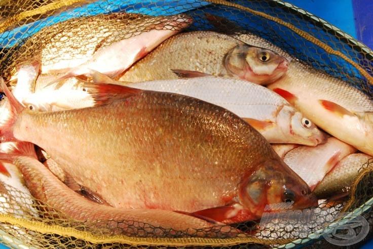 Duna szépsége és a halak ideiglenes látogatása szákomban nagyszerű kikapcsolódást nyújtott, hasonló élményeket kívánok nektek is!
