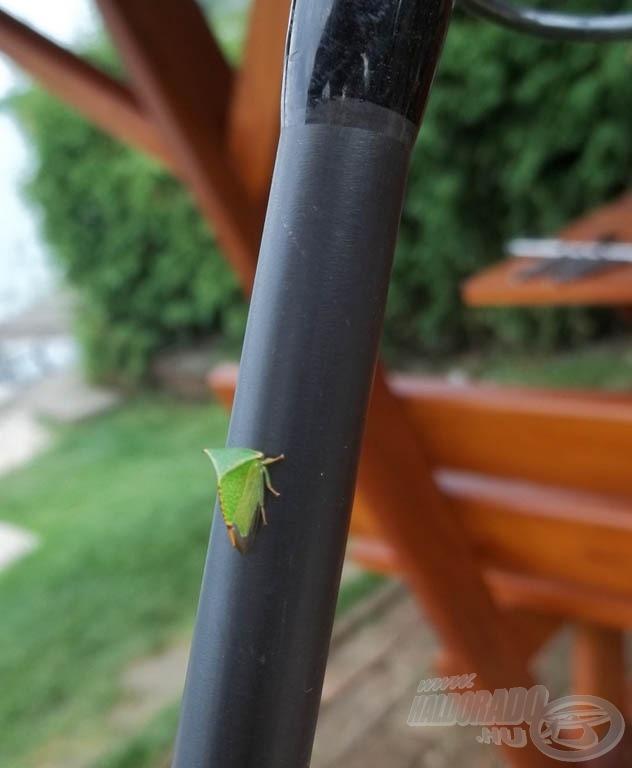 Még ez (az ismeretlen) rovar is fázott