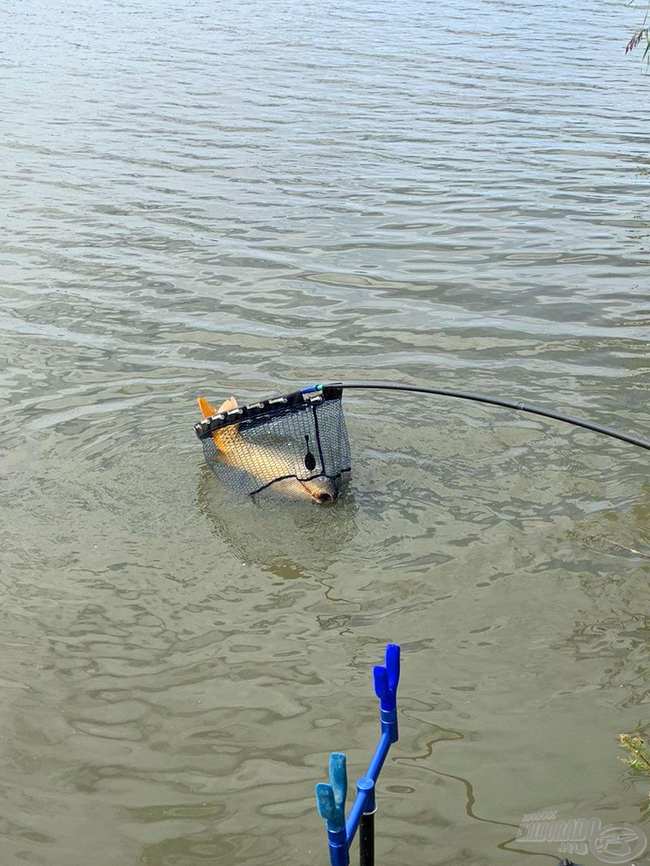 Olyan hosszú volt a hal, hogy alig fért a merítőbe