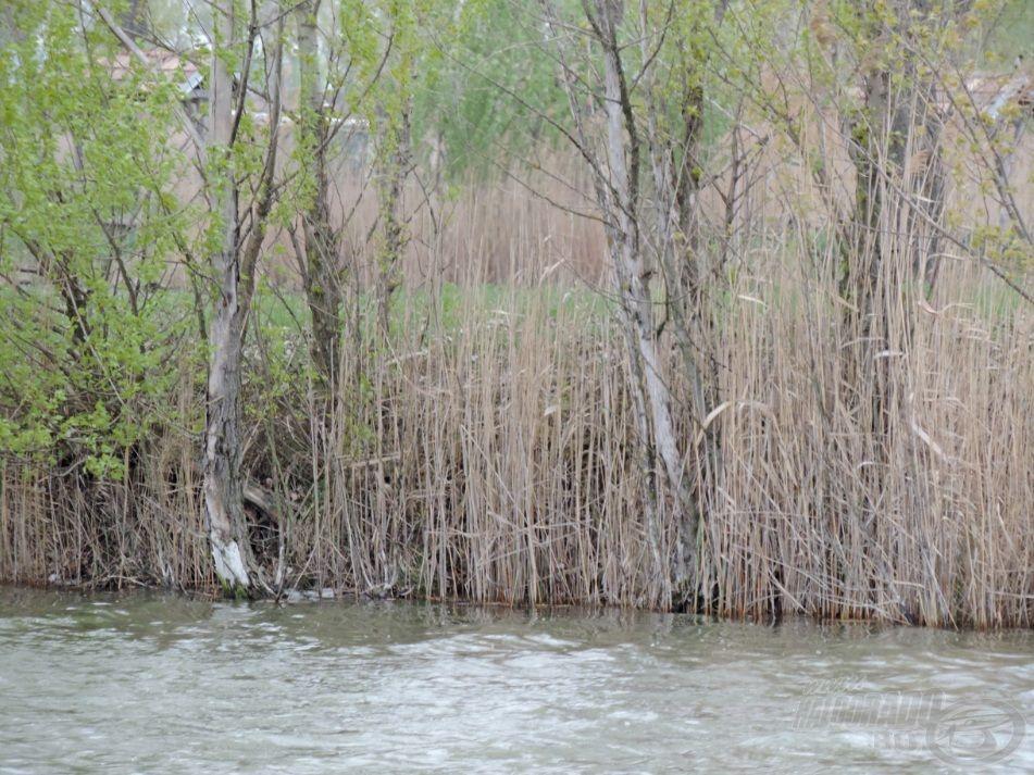 A meghorgászott terület a part szélétől egy-két méterre, a nád és a fák alatt lévő partközeli rész volt