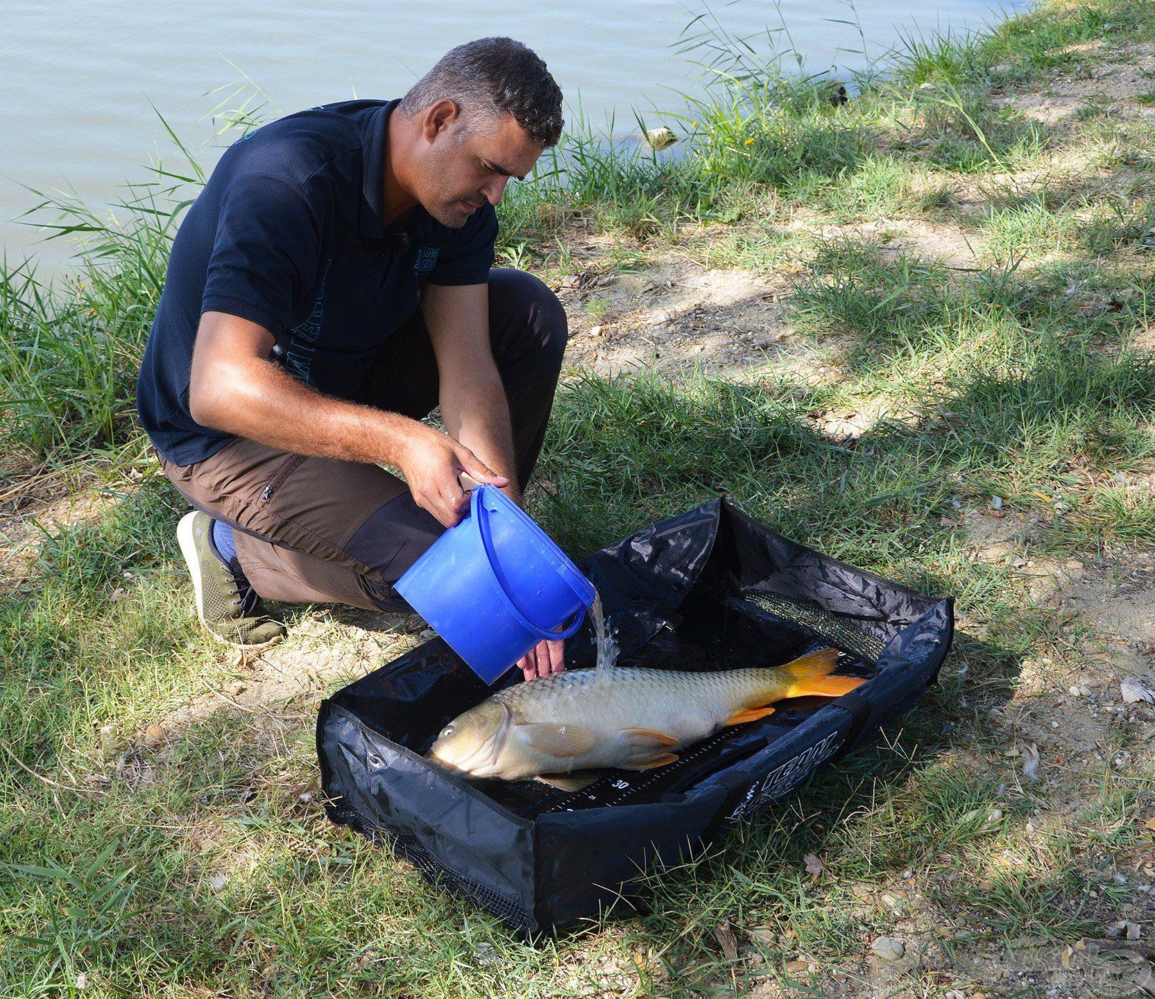 Nagyon fontos, hogy mindig vizezzük be a matracot, mielőtt a halat ráhelyezzük, és még utána is locsoljuk a halat, ha sokáig időzünk vele a parton