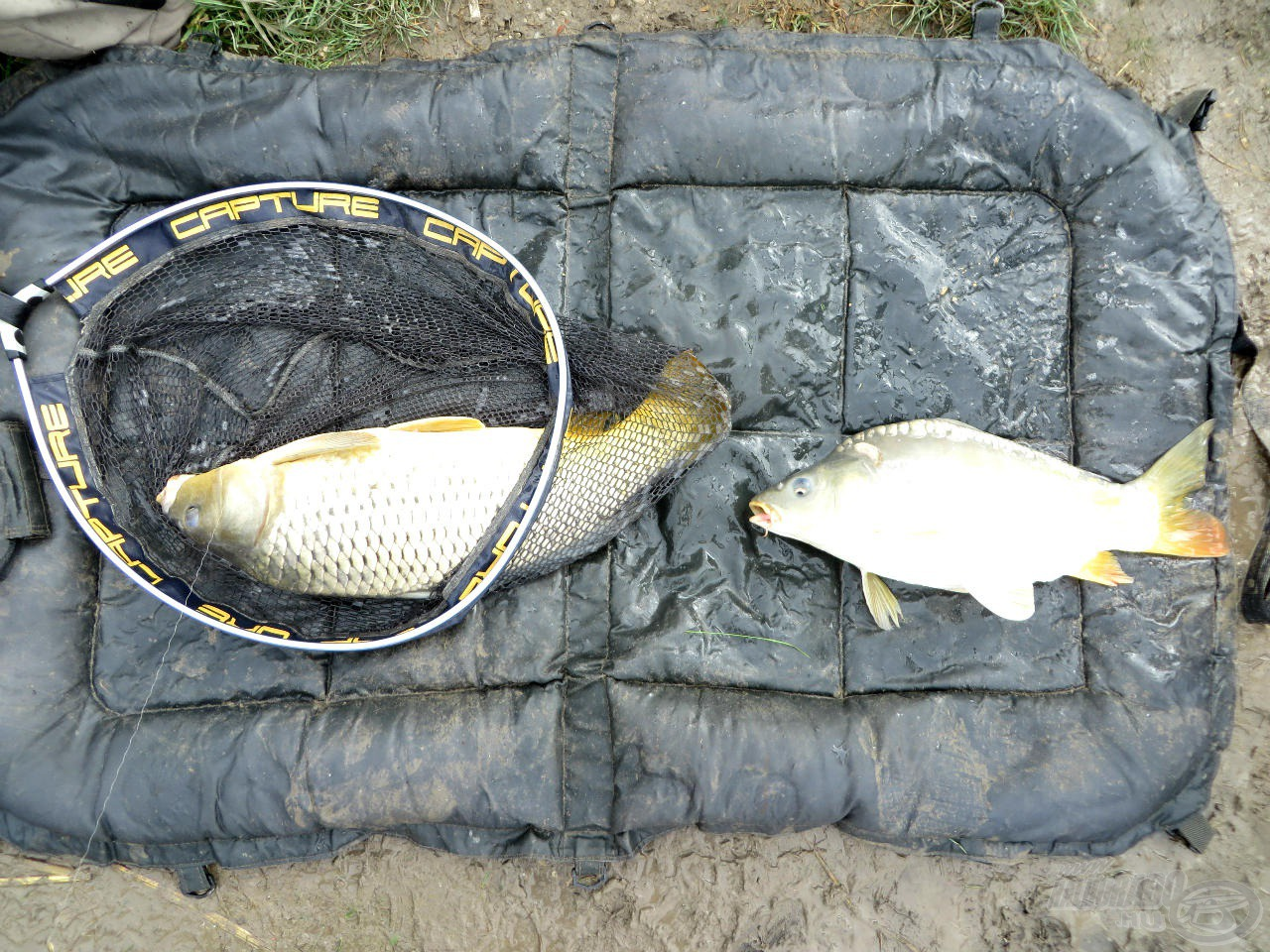 2 újabb hal a matracon, balról 4 kg, jobbról 2 kg