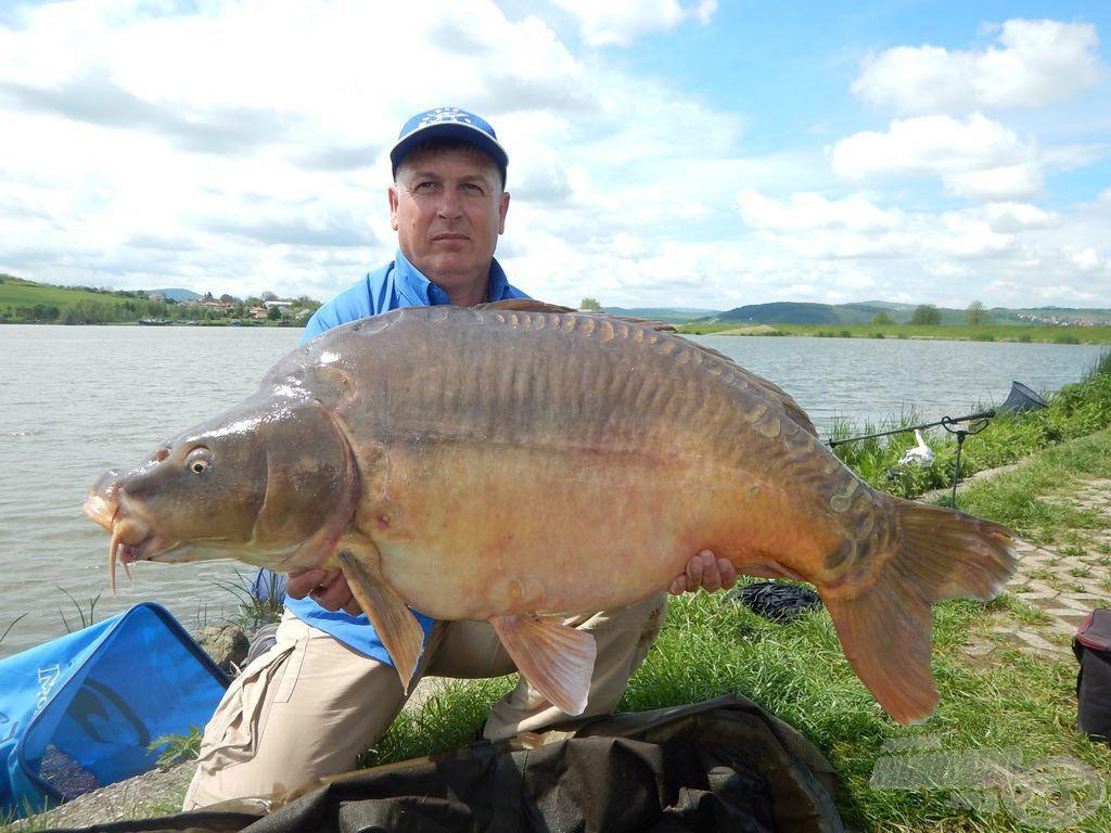Sisa József csapattársam is ennek a keveréknek köszönhette a maconkai 24,9 kg-os rekordponty megfogását!