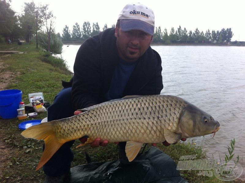 Szilvás bojlira megjött a legnagyobb hal, egy 4,5 kg-os nyurga