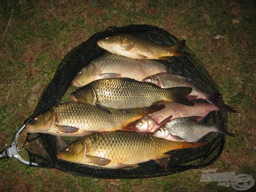 Az éjszakai horgászat részeredménye néhány óra után