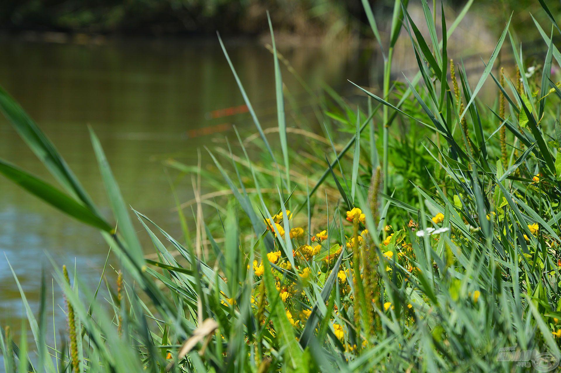 A nyár színfoltjai még szebbé tarkítják az üde zöld környezetet