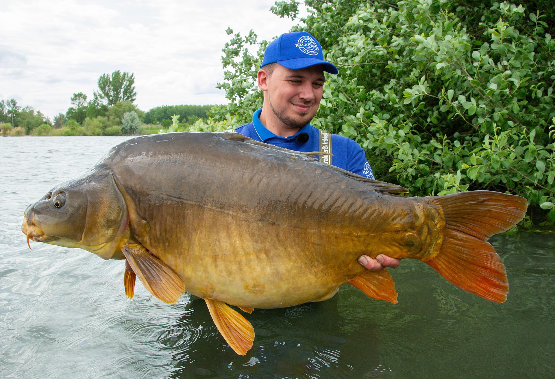 Egy 20 kg feletti, csodálatos tükörponttyal ajándékozott meg a tó, ami egyben új tükörponty rekordom is lett!