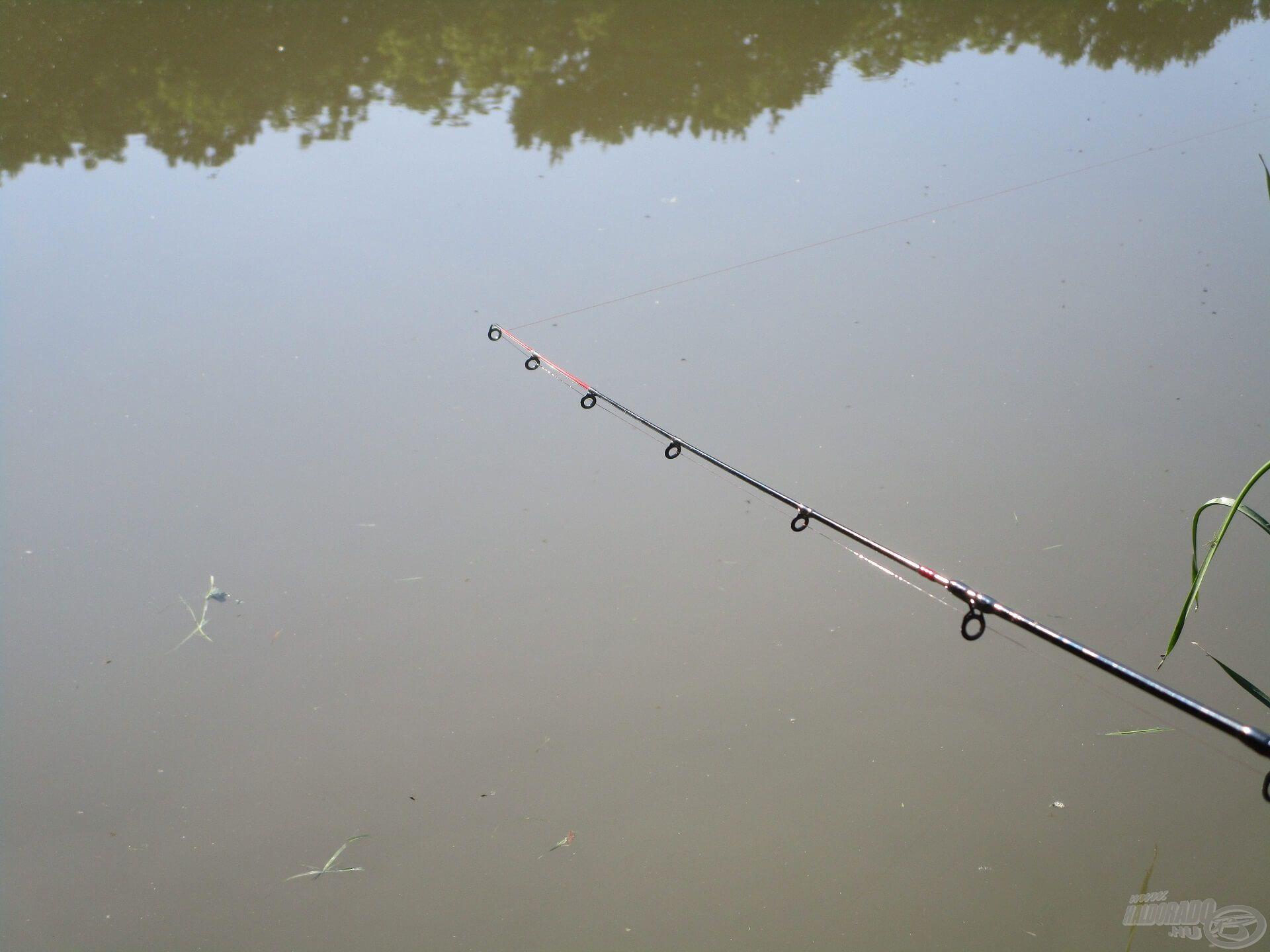 A spiccek nem rezdültek, de türelmesen vártam és bíztam abban, hogy nem fejezem be hal nélkül a horgászatot