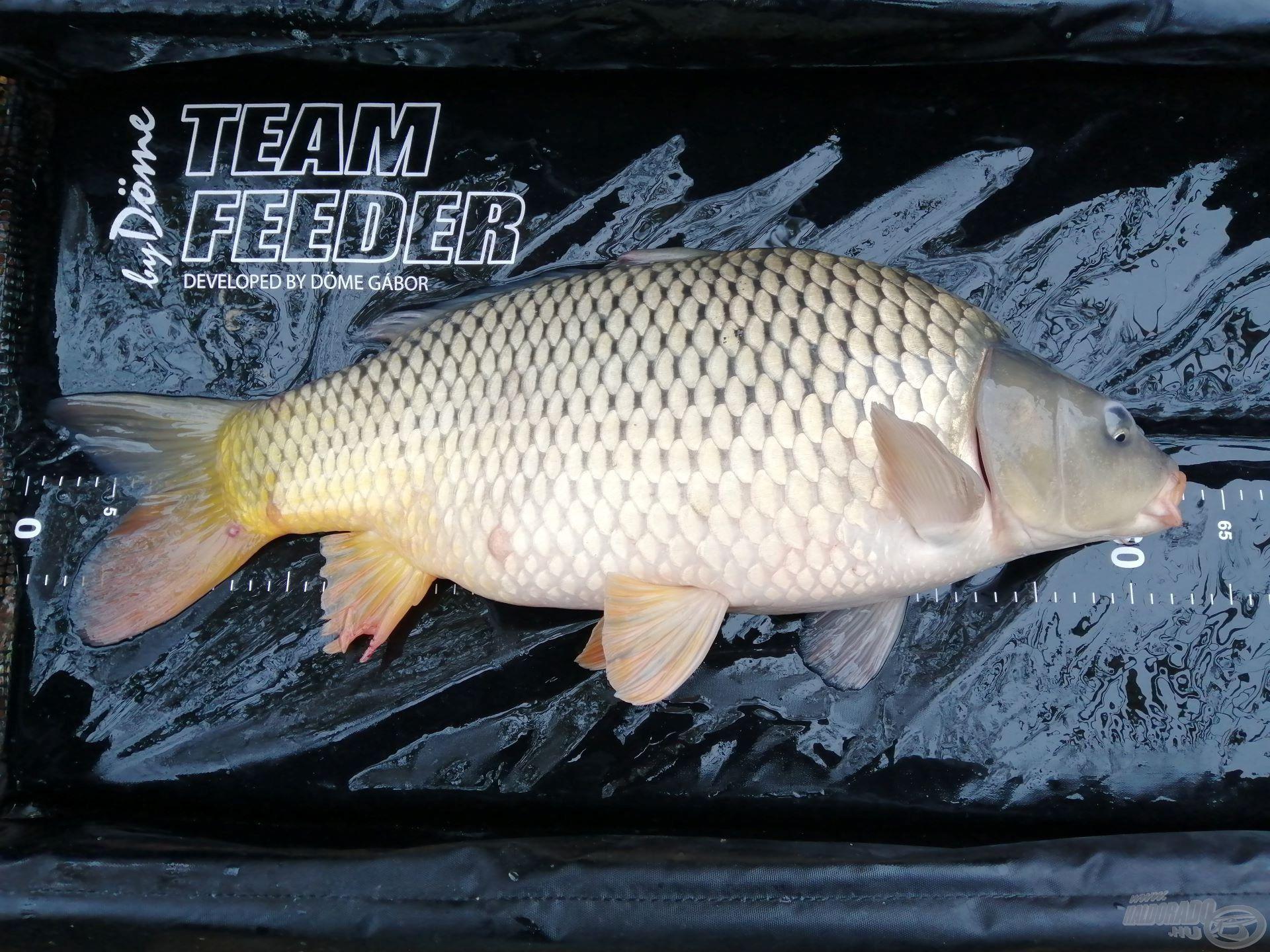 Ezek a pocakosabb, darabosabb halak kárpótoltak mindenért