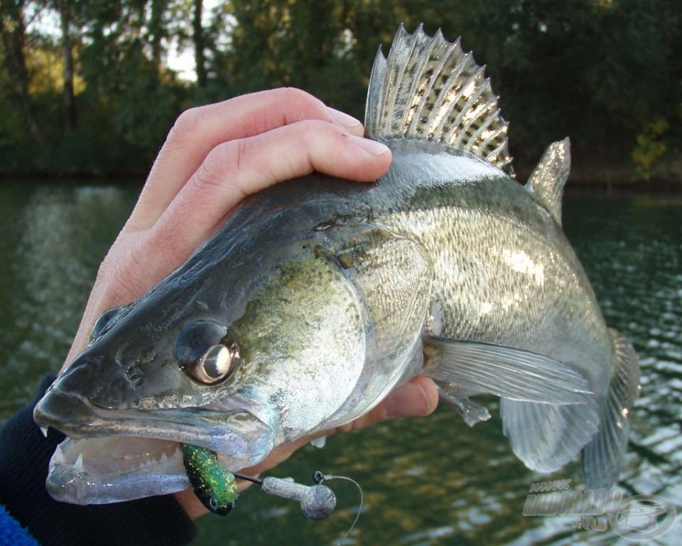 Kis gumira egész jó hal