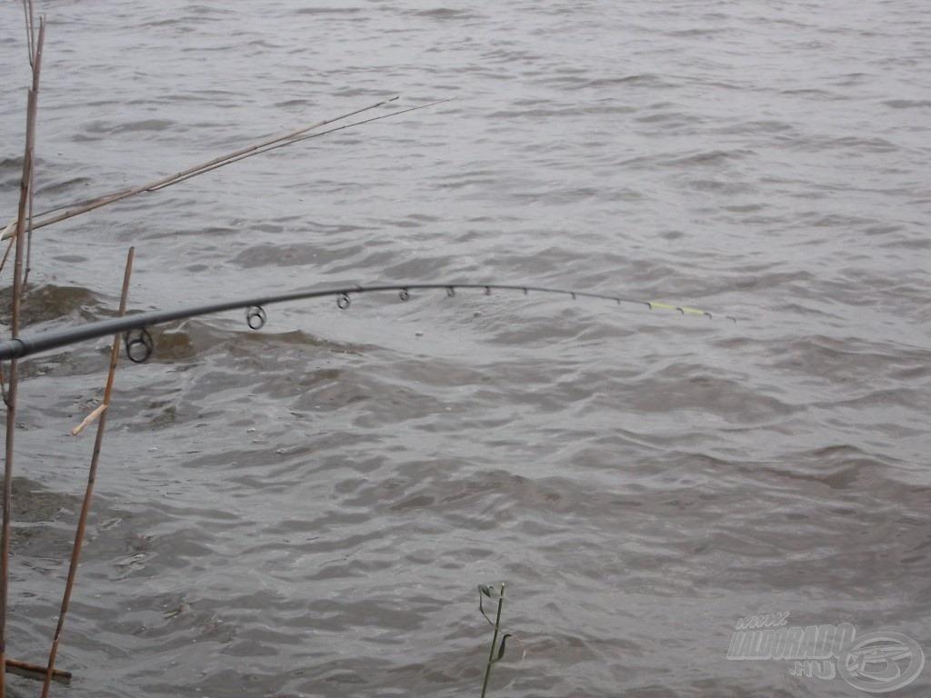 """A rendkívül erős hal elment jobbra, teljesen a part alá - éreztem, ahogy a fonott dobóelőke zsinór """"pattog"""" a nádtorzsákon…"""