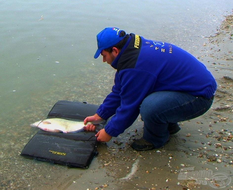 A kapitális halak kiemelten kíméletes bánásmódot érdemelnek!