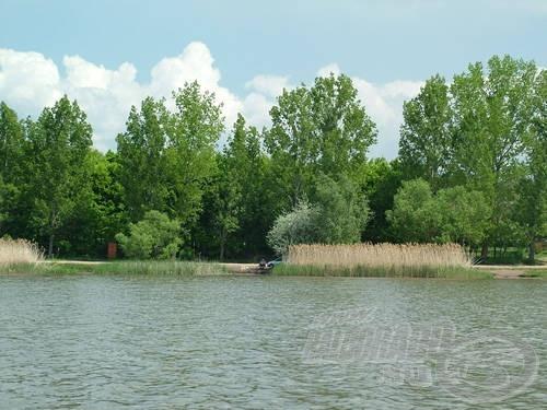 A Palotási-víztározó a jellegzetes, sűrű nádfalakkal