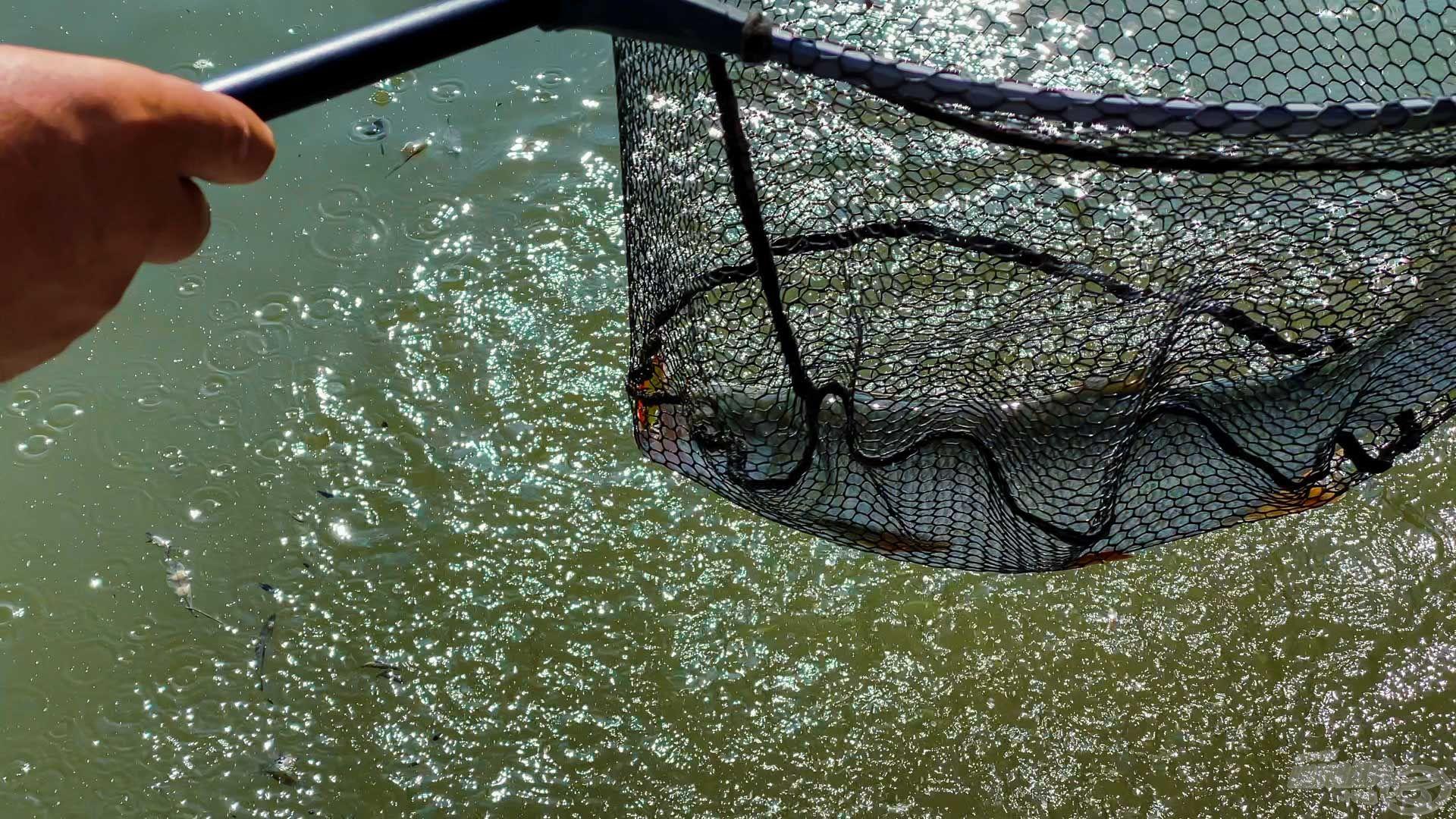 Megtanultam, ugrabugráló halhoz kell a merítő, vagy rossz esetben irány az SBO