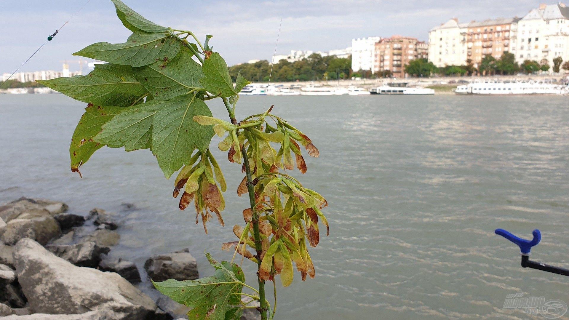 A Duna folyó sajátossága, hogy sokszor nem várt dolgok is horogra akadhatnak
