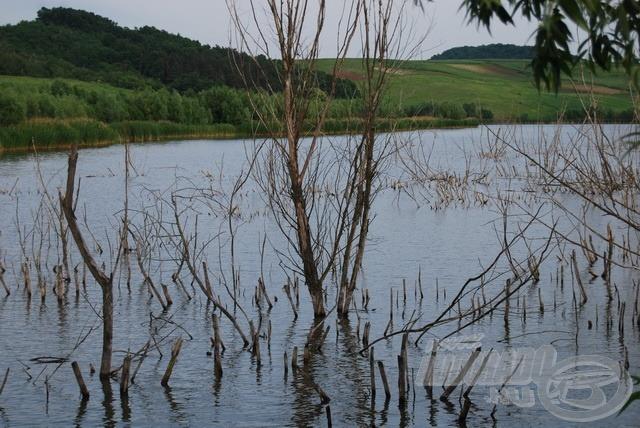 Hogy lehet innen a halat kivenni? A tó egész területe ilyen? Nem, de tudomásul kell venni, hogy sok az akadó (forrás: www.sinkarto.hu)