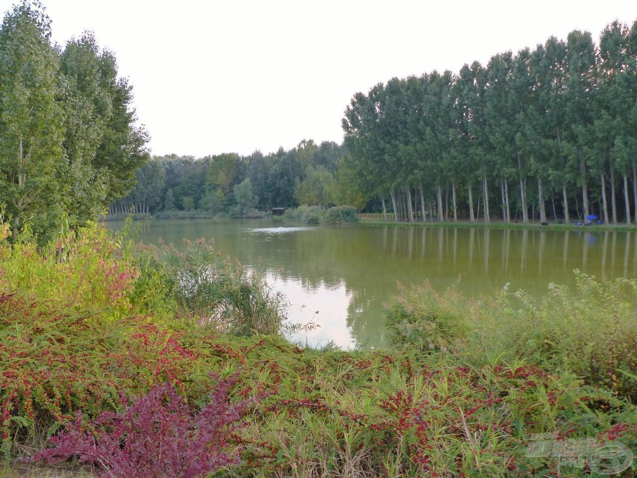Nem mindennapi hangulatot ad a horgászatnak, hogy a tavat egy kis erdő övezi