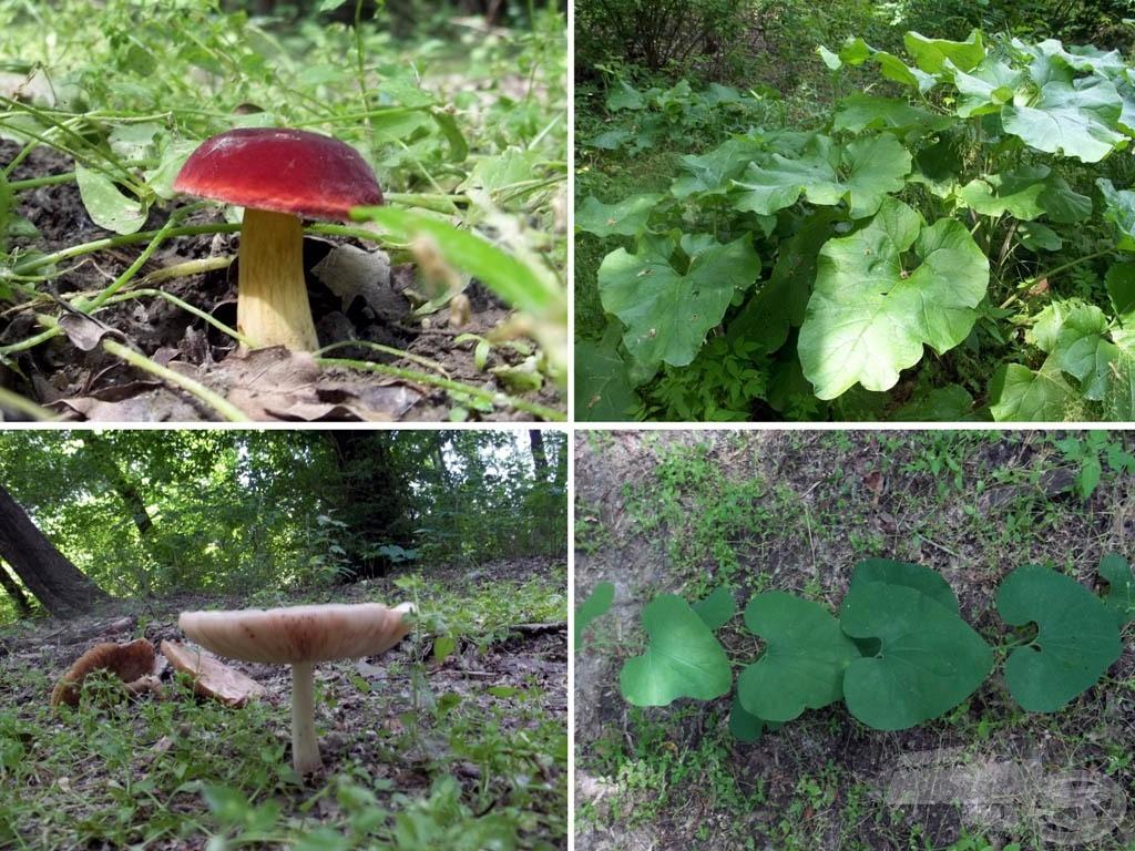 Gombák, növények minden színben, formában, mennyiségben