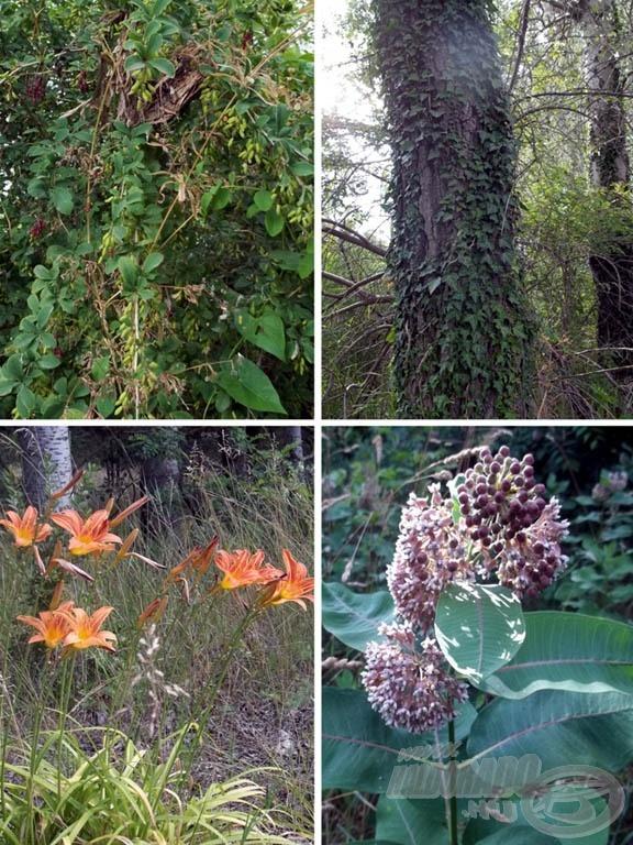 A növényvilág is ereje teljében volt