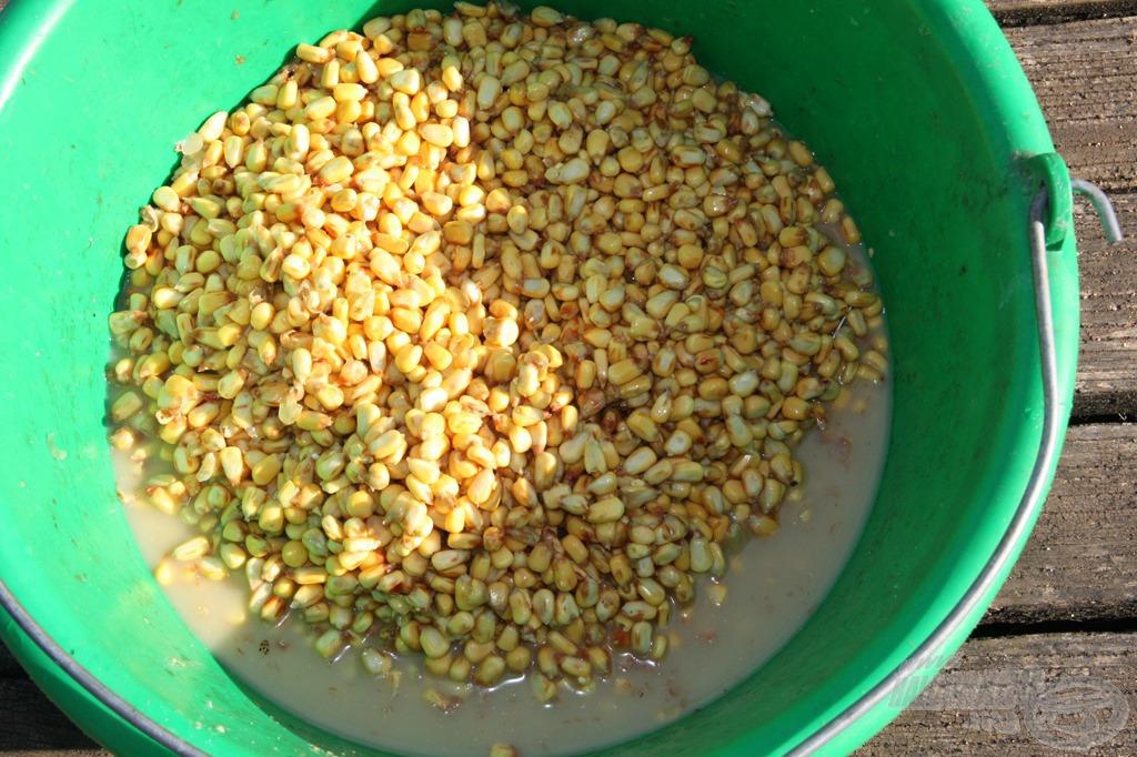 Odahaza erjesztett kukorica szoktató etetésnek