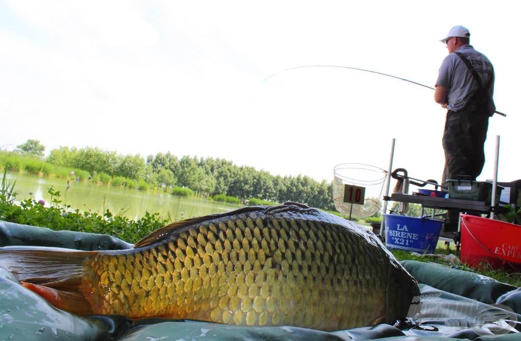 A nagytestű halakat a verseny során folyamatosan mérlegeltük, hogy minél hamarabb vissza lehessen engedni őket… Volt, hogy olyan intenzíven jött a hal, hogy még fotózkodni sem volt vele ideje a horgásznak!