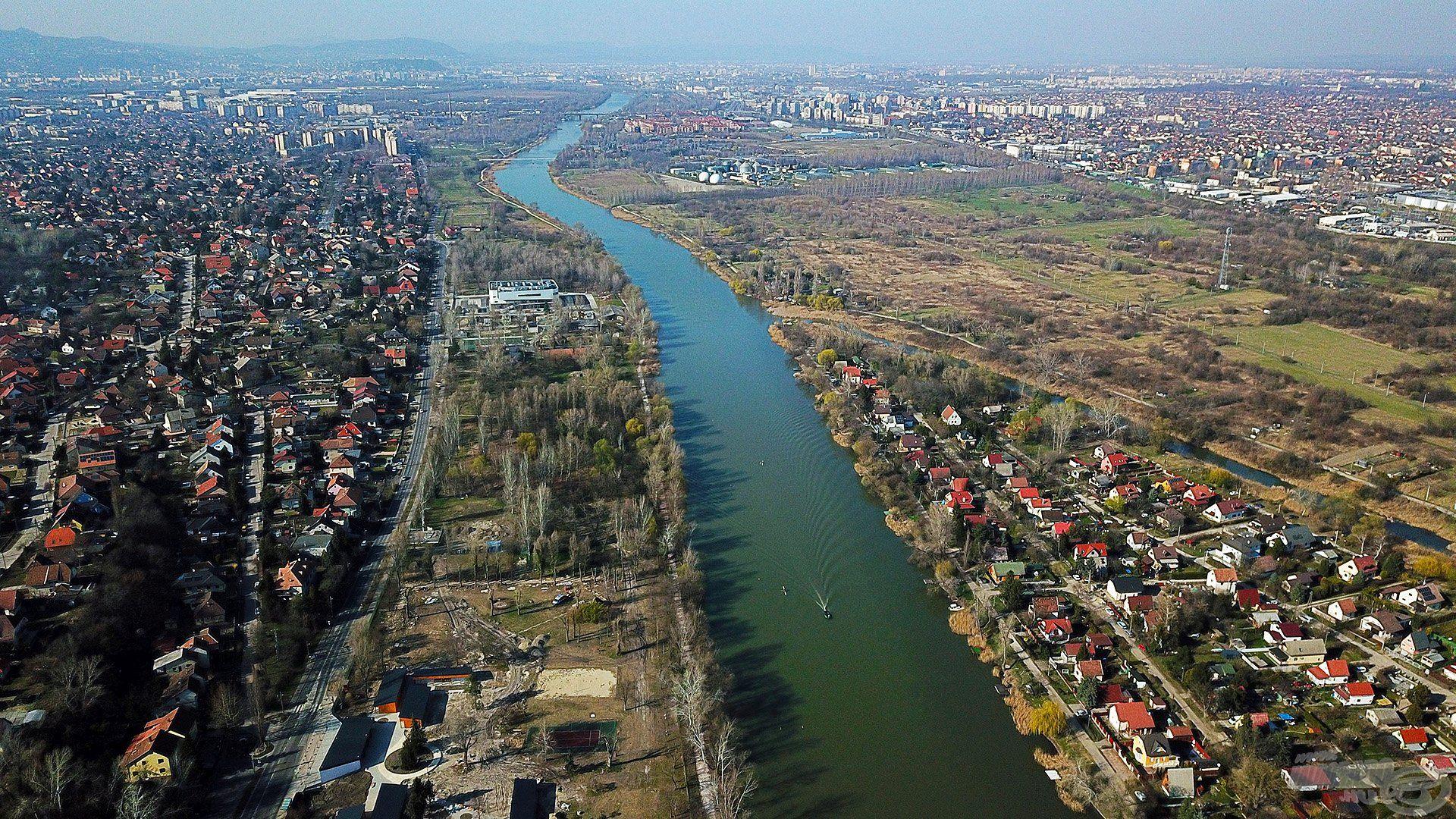 A Ráckevei-Duna-ág ideális élőhelyet teremt a leggyakrabban szákba kerülő keszegfajnak, a dévérkeszegnek