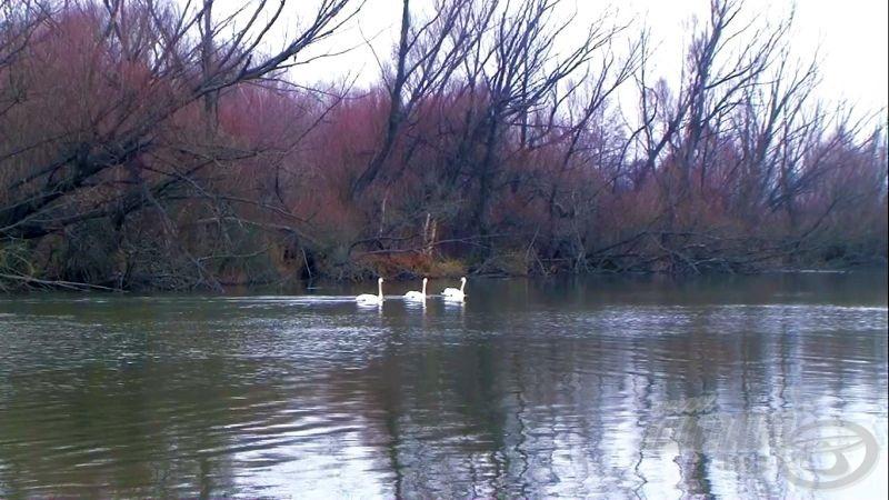 A folyót vadregényes ártéri erdő öleli