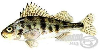 Tilalmak és korlátozások: Tiltott halak 2. rész