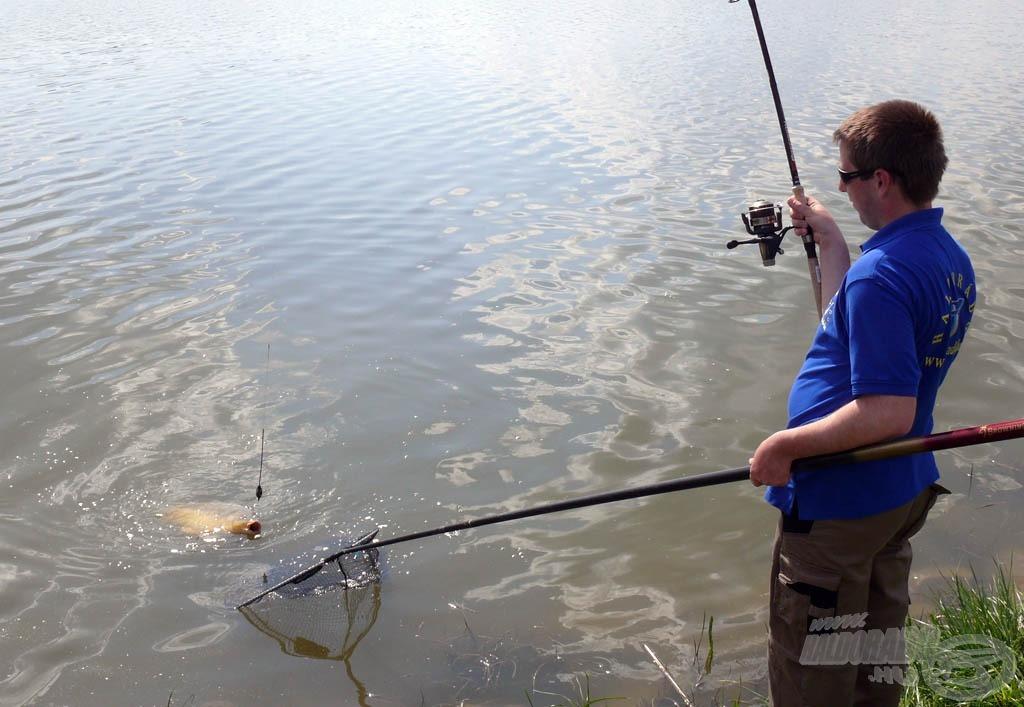 A halak is partnerek voltak Tamás munkájában